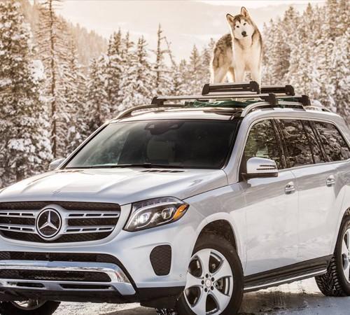 Mercedes-Benz and Loki the Wolfdog